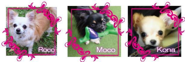 愛犬 Roco・Moco・Kona