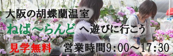 大阪の胡蝶蘭温室へ行こう