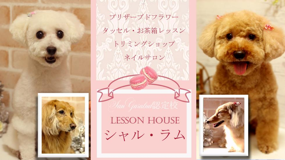 春日井市牛山町の自宅にてトリミング&ネイルサロンをしています♫ 我が家には、ゴールデンレトリバー4頭、チワワ2匹、トイプードル2匹の愛犬がいます♡